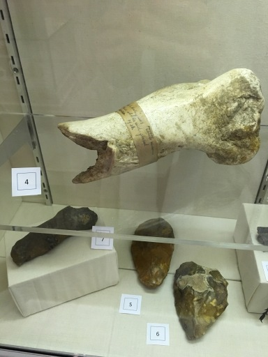 Elephant Tusk and Flints