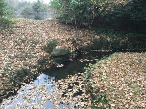jan-rocky-stream-ewell-court
